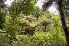 Auckland Ayr Reserve