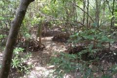Krabi - Mangrove Boardwalk