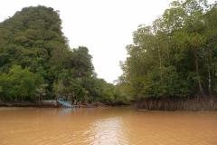 Krabi - Mangrove Tour