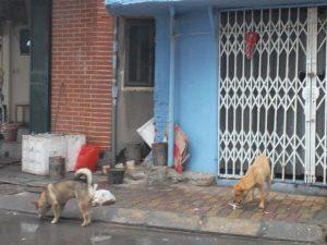 hunde hanoi