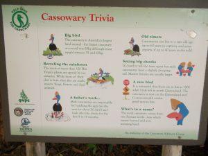 cassowary info Australia