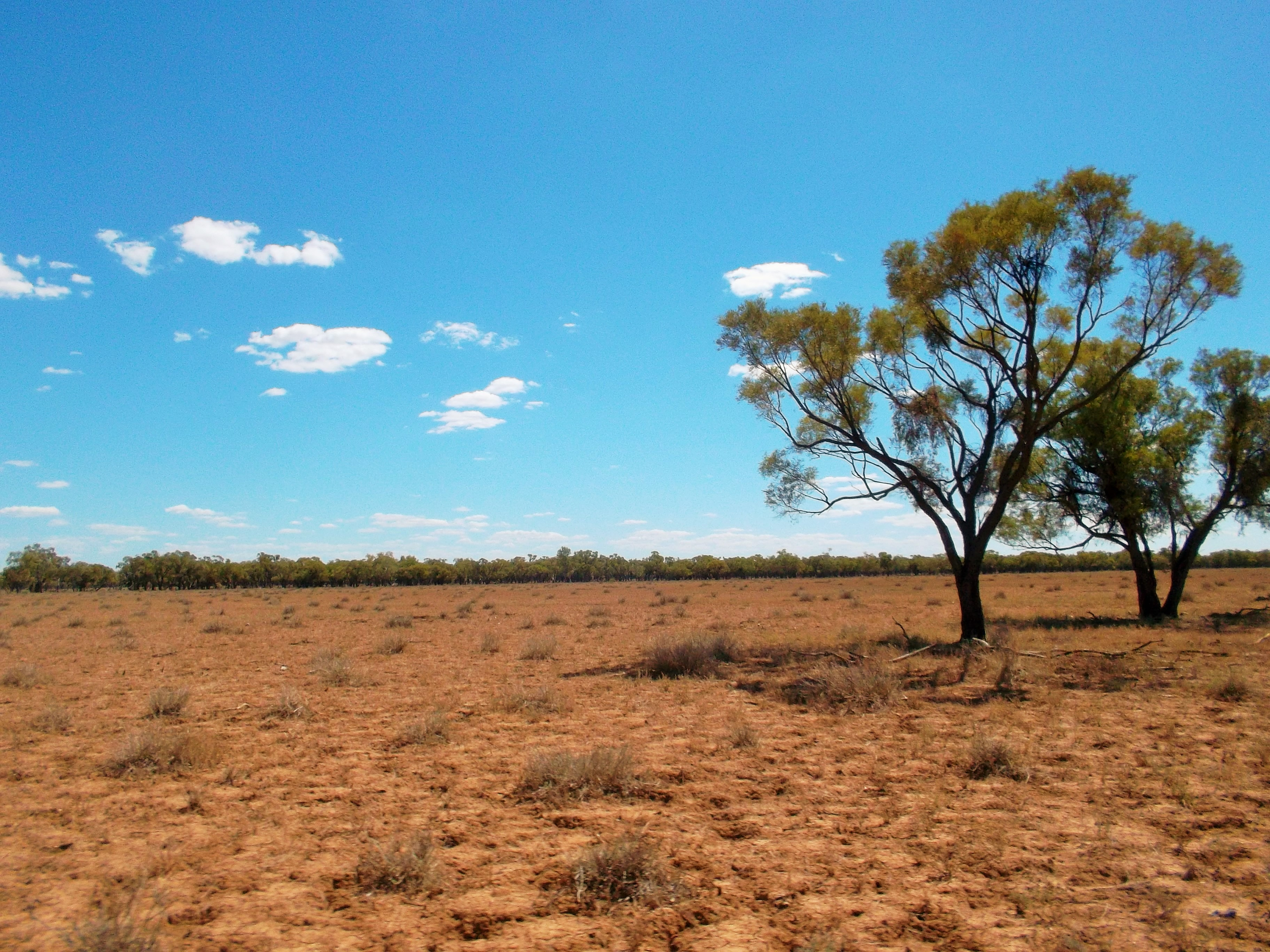 outback plain