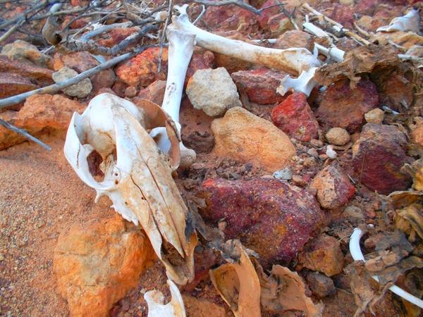 danger bones
