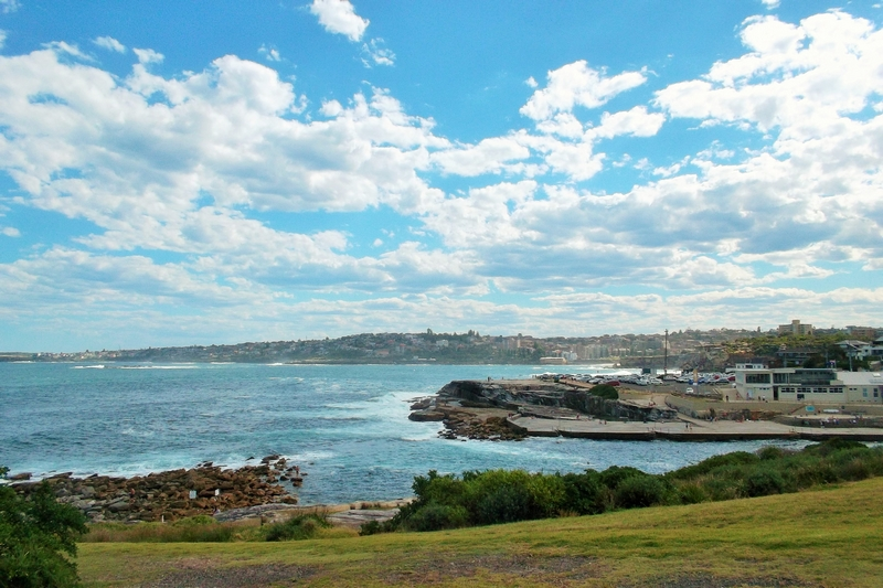 bondi to coogee walk shark point