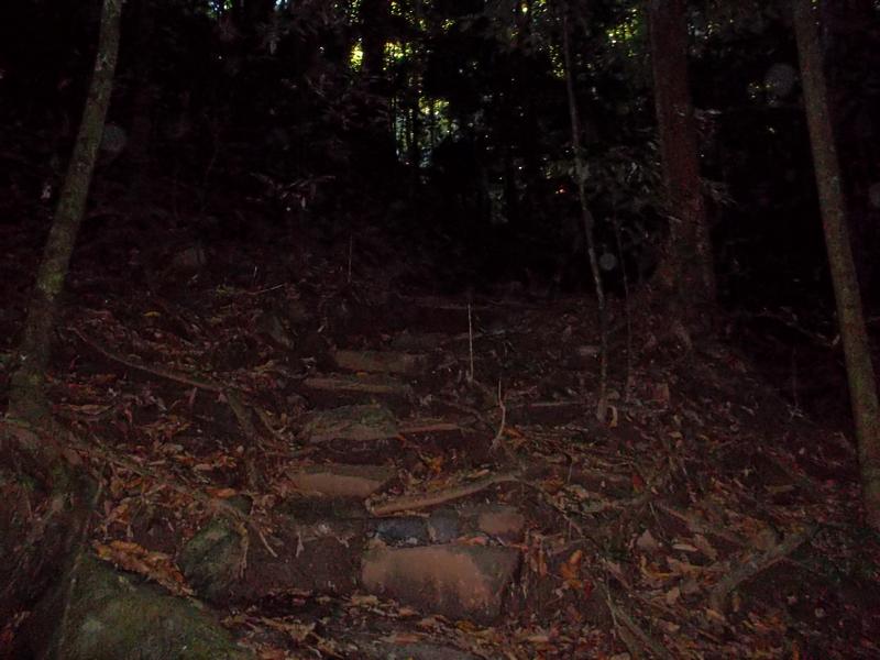 dark jungle 1