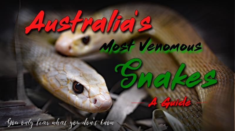australias venomous snakes