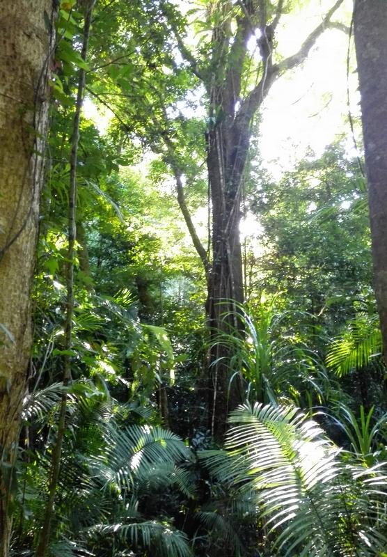 jungle australia
