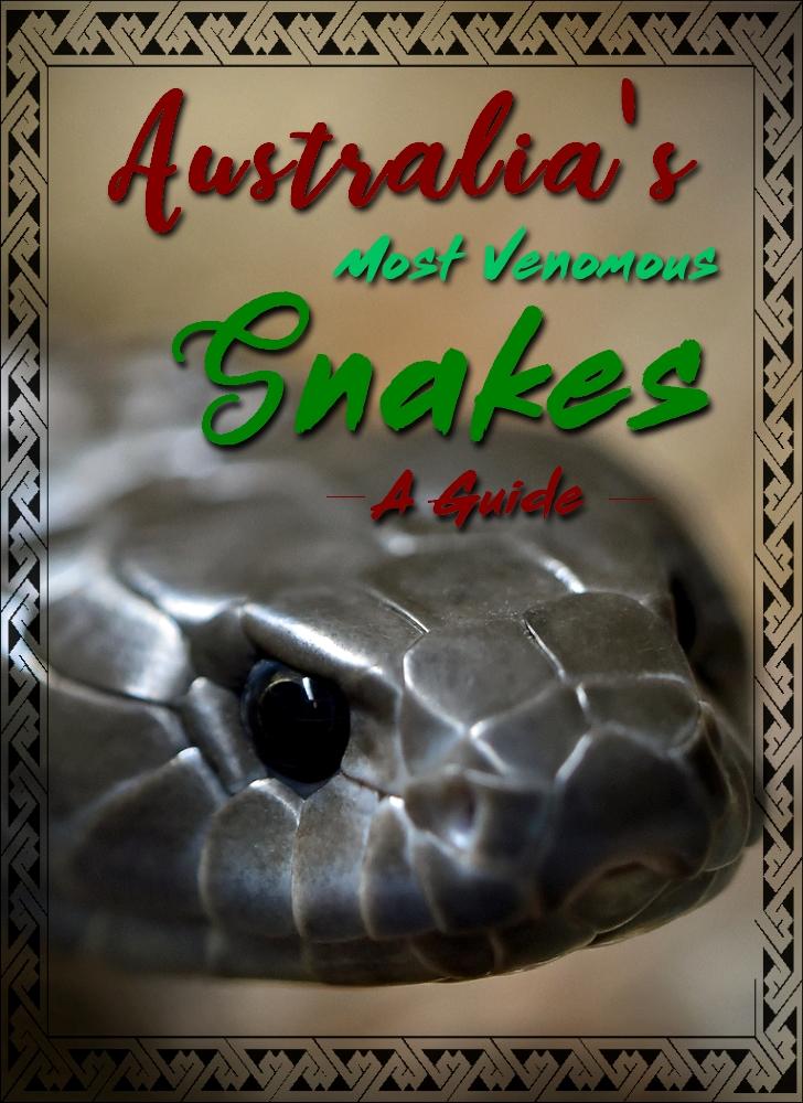 Australias most venomous snakes