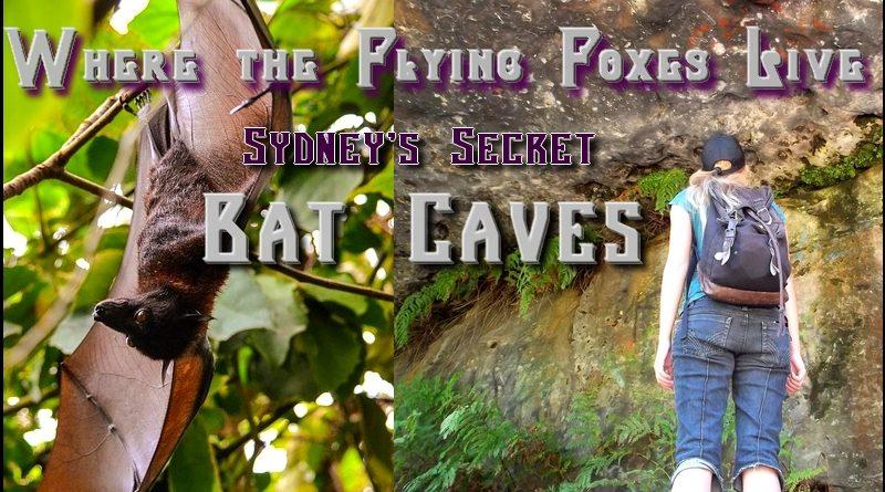 bat cave sydney
