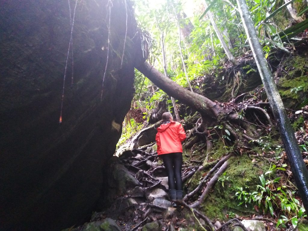 Steep Trails in Bako
